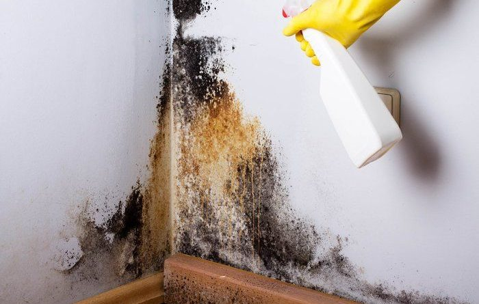 how to remove mold from wood