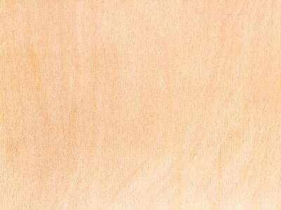 what is the color of beech wood