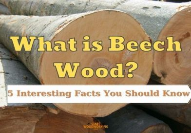 what is beech wood